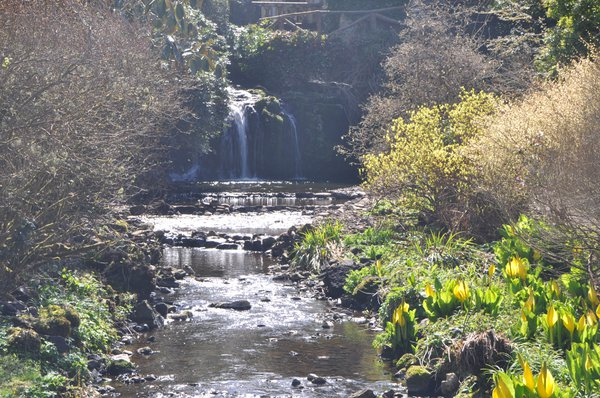 A waterfall at Finlaystone Country Estate Garden