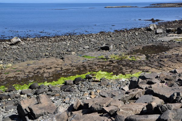 Dinosaur footprints may be found on this Isle of Skye shore when the tide is out
