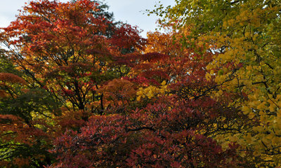 Vivid autumnal colours can be seen in the Botanic Gardens