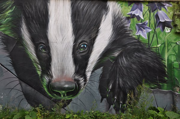 Badgers have been seen in Glasgow outskirts