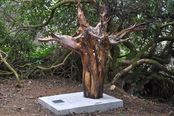 Tree roots make an impressive sculpture